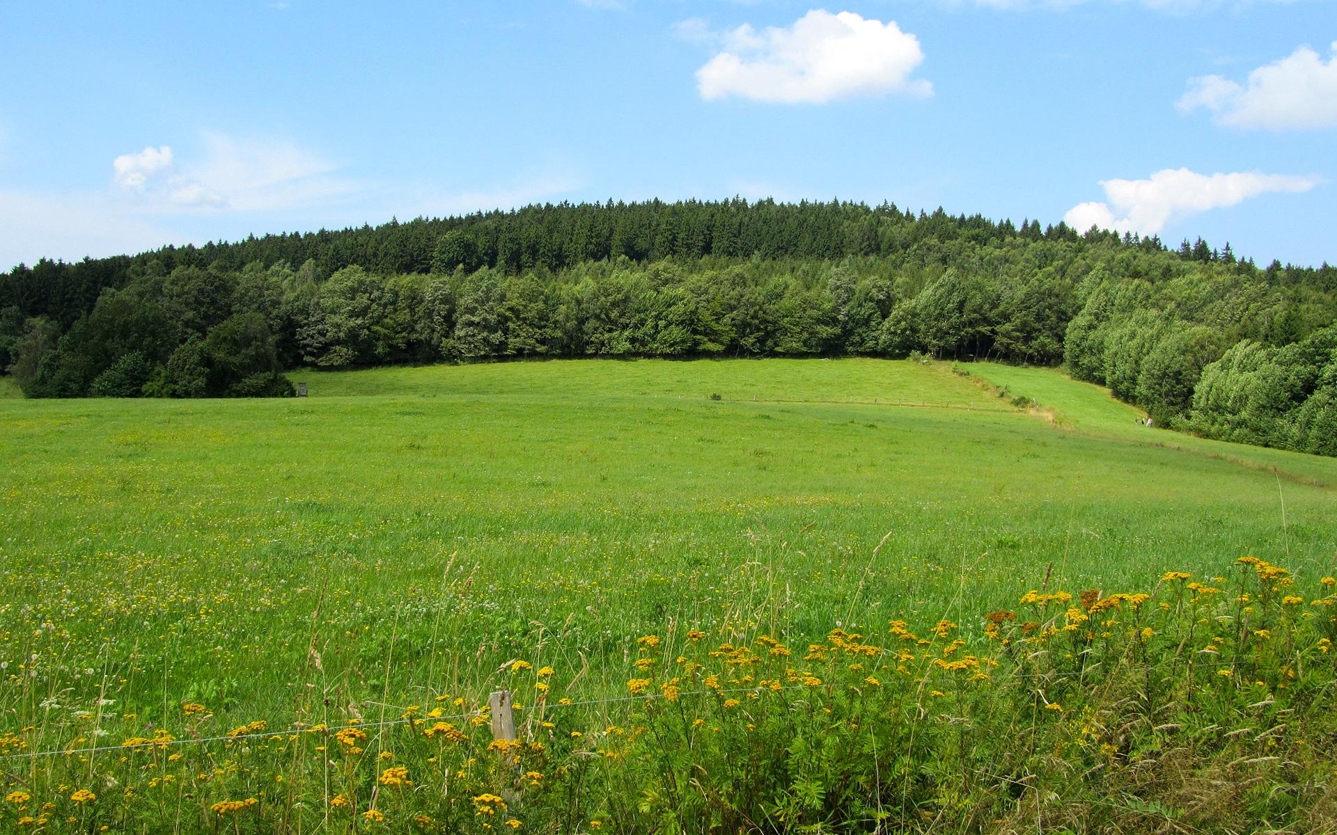 Grassland Wallpaper