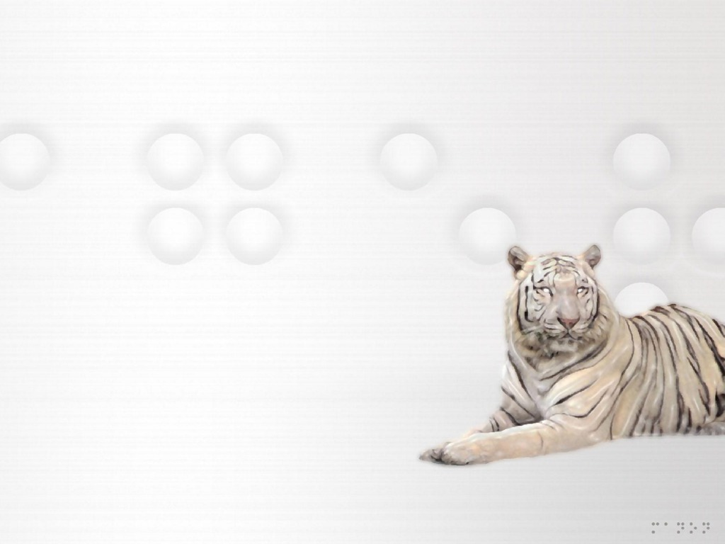 White Tiger Wallpaper 11019 Hd Wallpapers in Animals   Imagescicom 1024x768