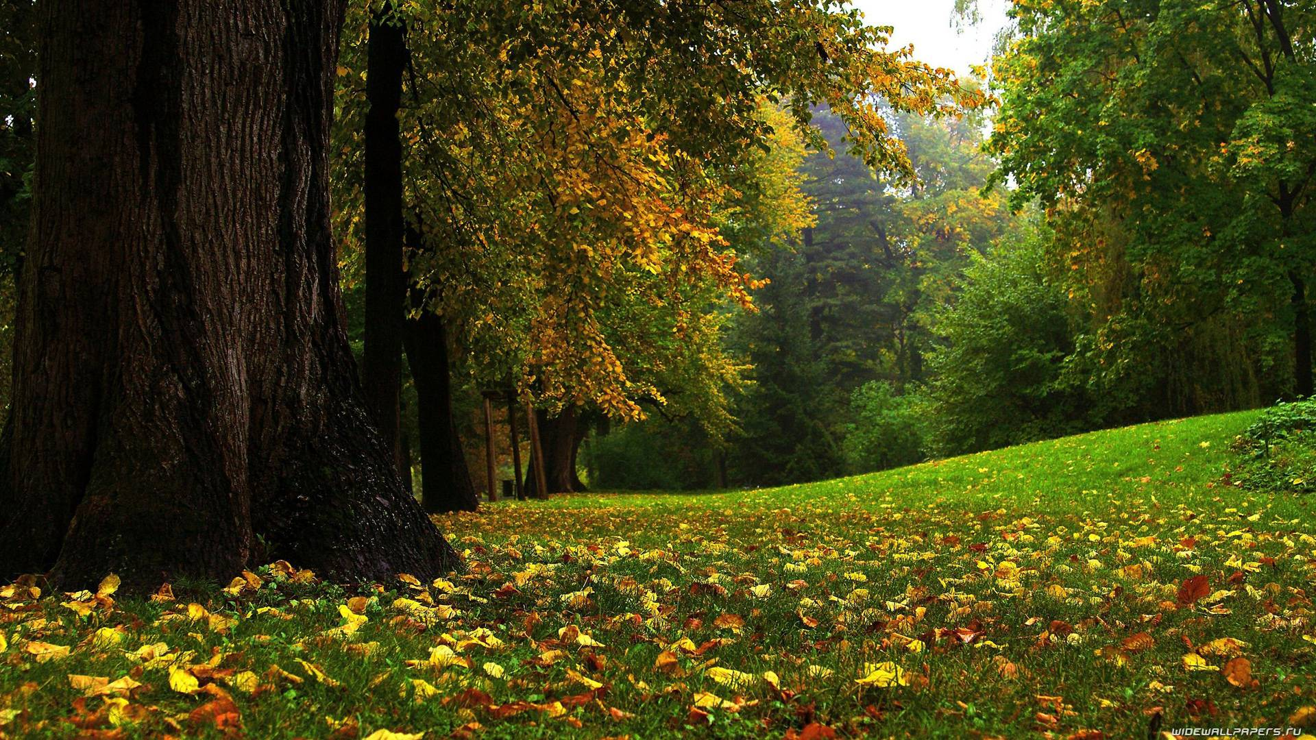 Autumn Backgrounds Desktop 1920x1080