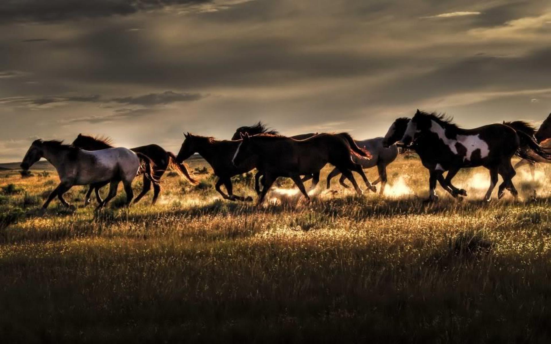 Wild Horses Desktop Wallpaper Wild Horses Pictures Cool 1920x1200