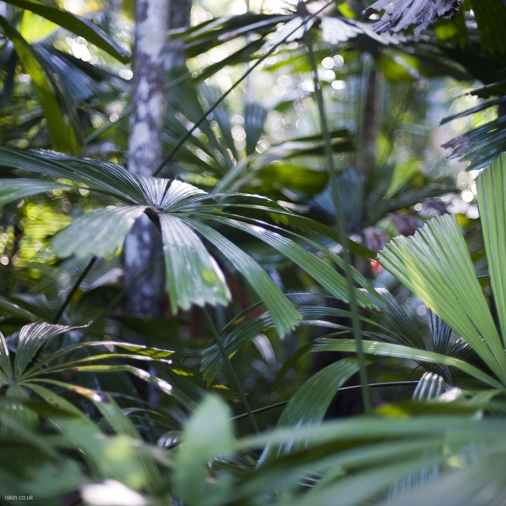 palm leaves Desktop Wallpaper iskincouk 1024x1024