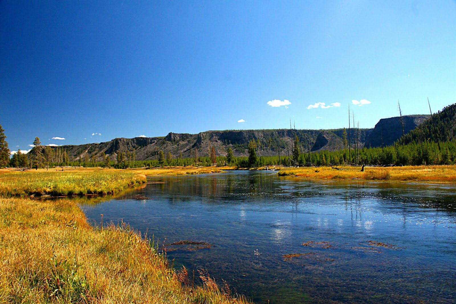 Fly Fishing In Yellowstone National Park A Caddis Afternoon 1600x1067