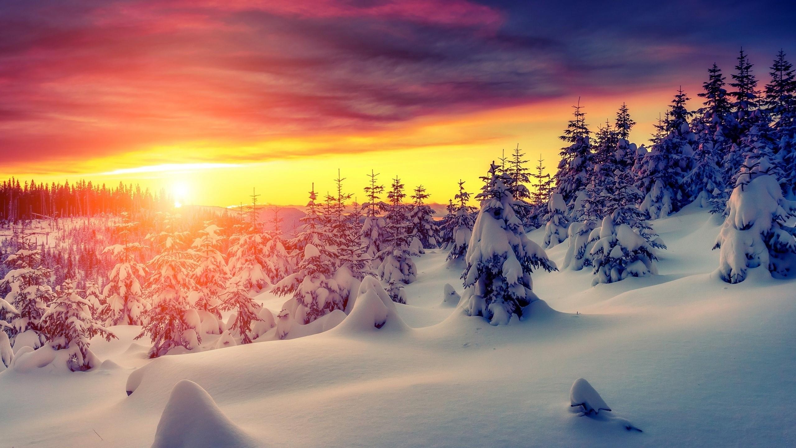 Beautiful Winter Sunrise Wallpaper 2560x1440