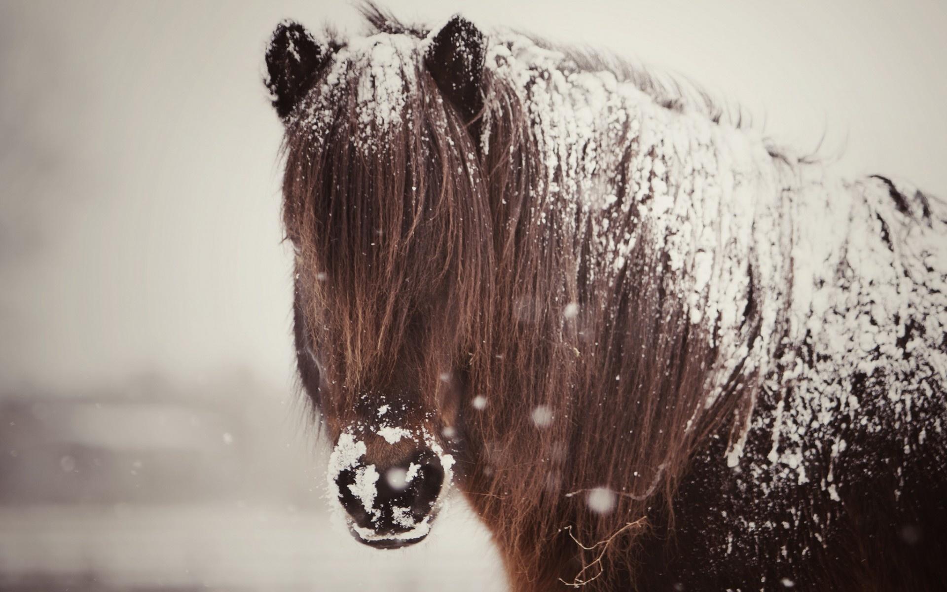 Wallpaper horse snow winter desktop wallpaper Animals GoodWP 1920x1200