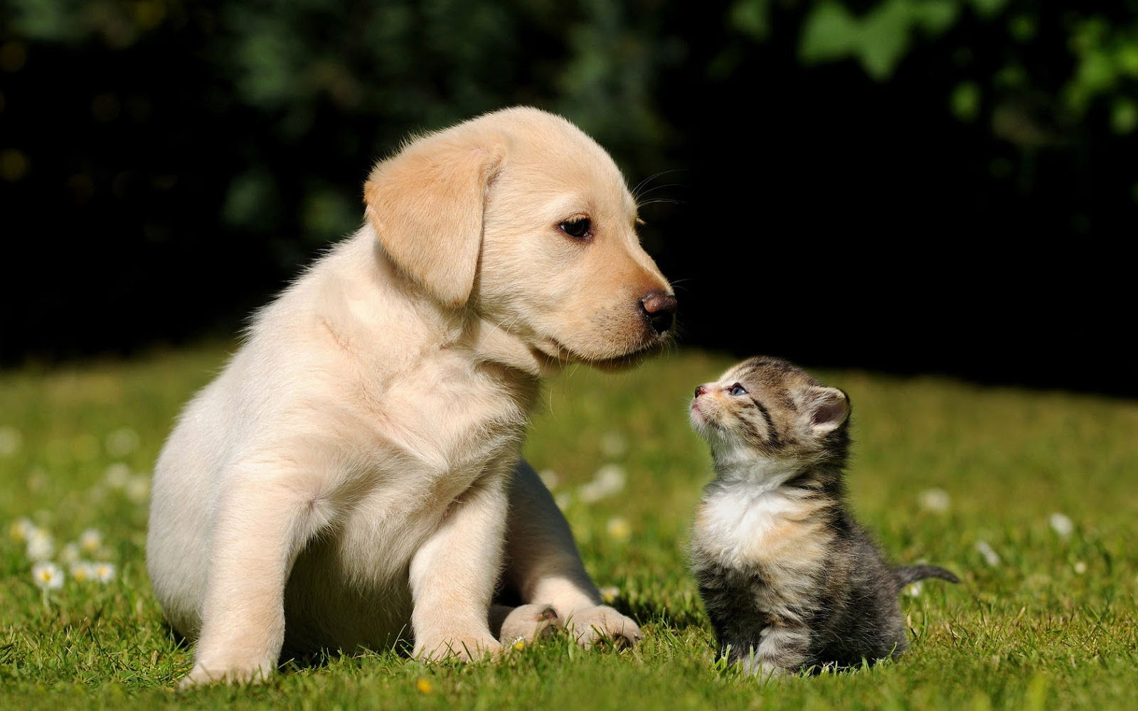Of Dogs And Cats Hd Romantic Cat And Dog Wallpaper Hd Dogs And Cats 1600x1000