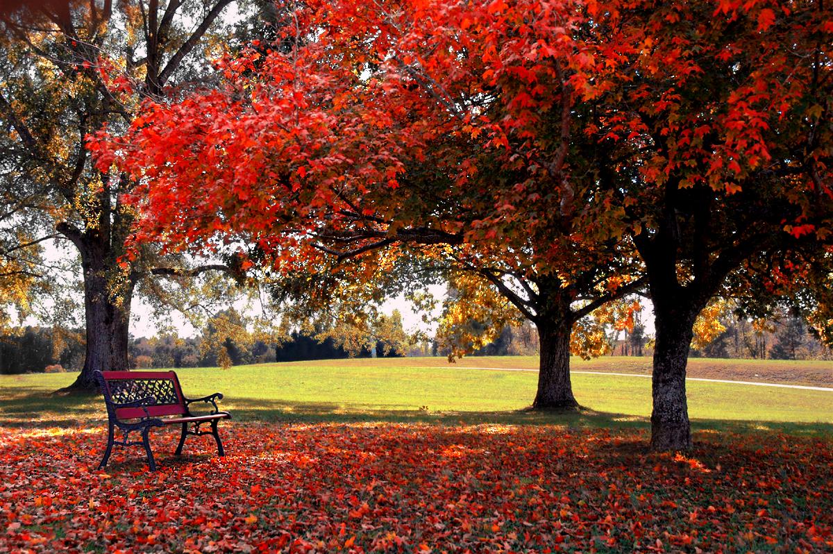 fall desktop backgrounds fall desktop backgrounds windows Desktop 1200x798