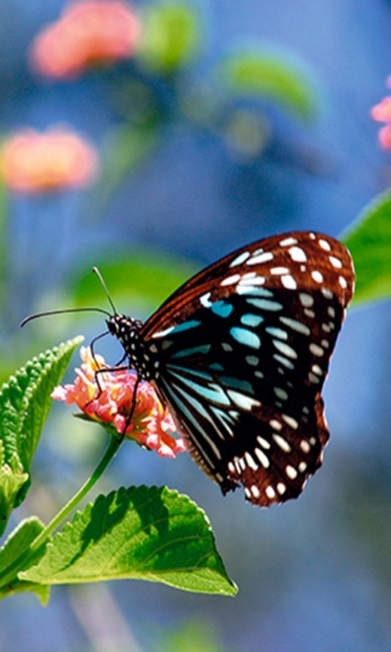 49+ Free Wallpapers and Screensavers Butterflies on ...