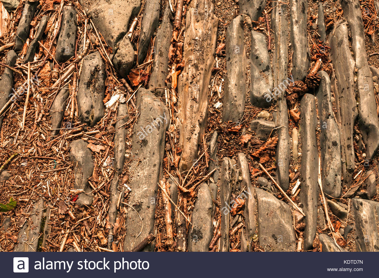 Stony Forest ground with leaves and twigs textured background 1300x953