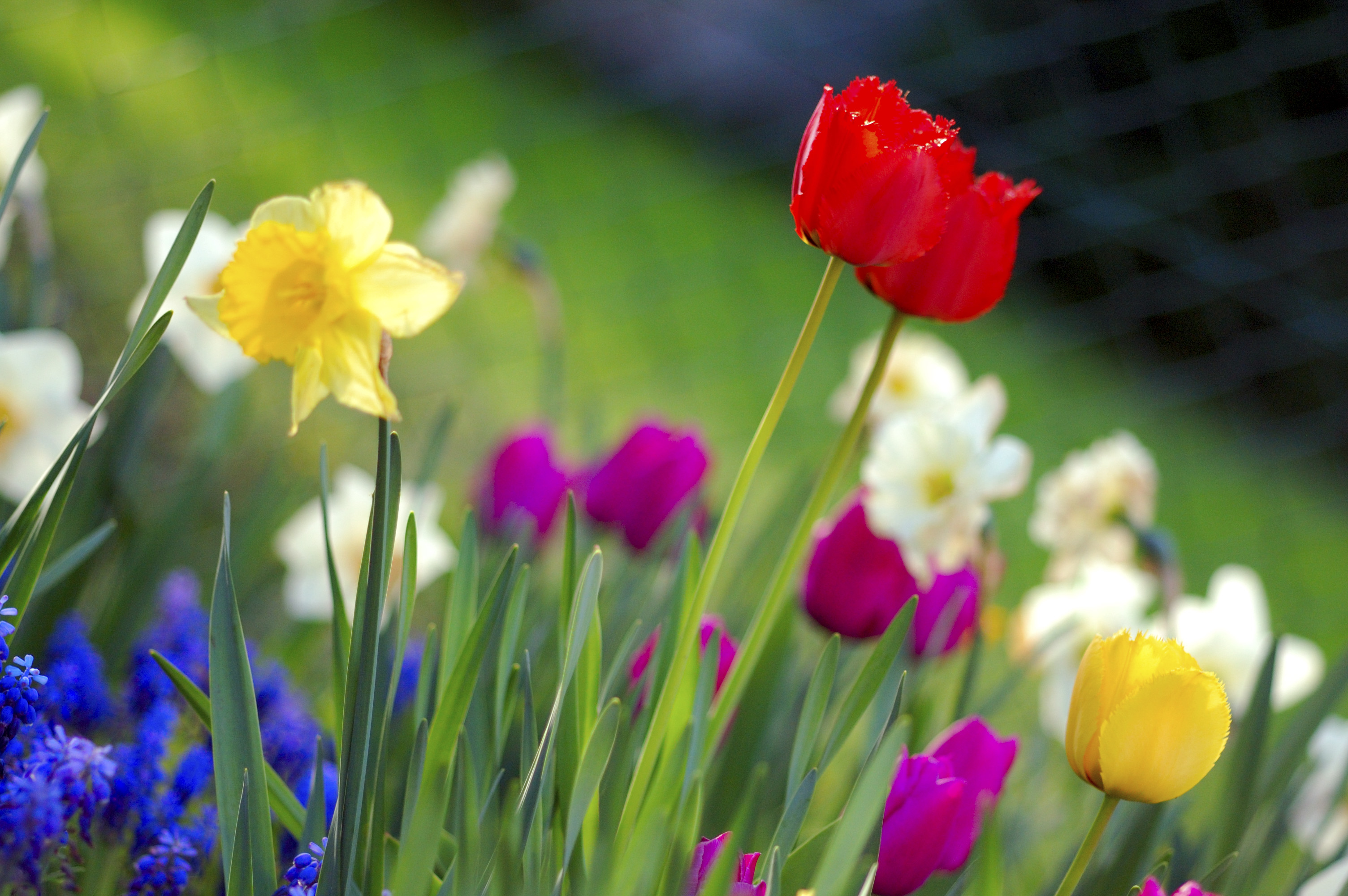 Spring Wallpapers for your desktopHope you like this HD Spring 3008x2000