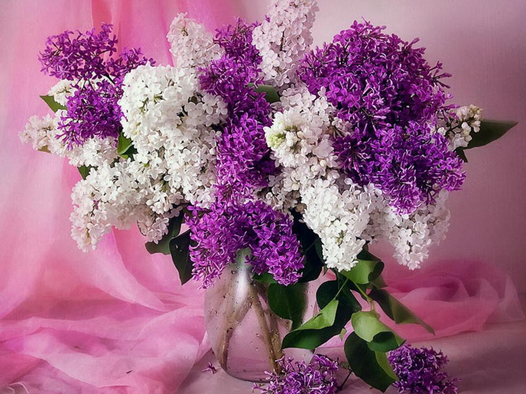 download wallpaper 1024x600 lilac - photo #24