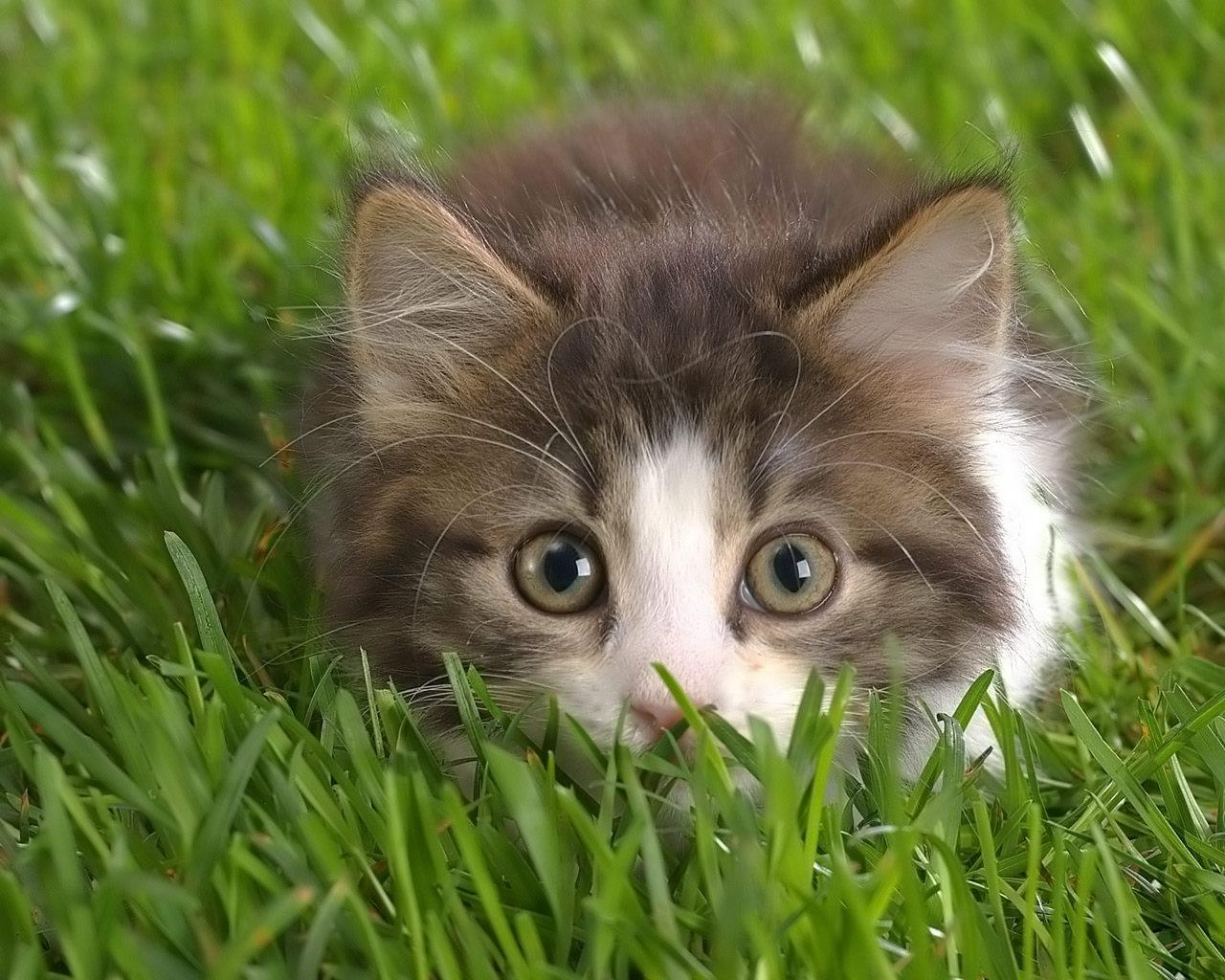 Kitty Cat Desktop Wallpaper Wallpapersafari