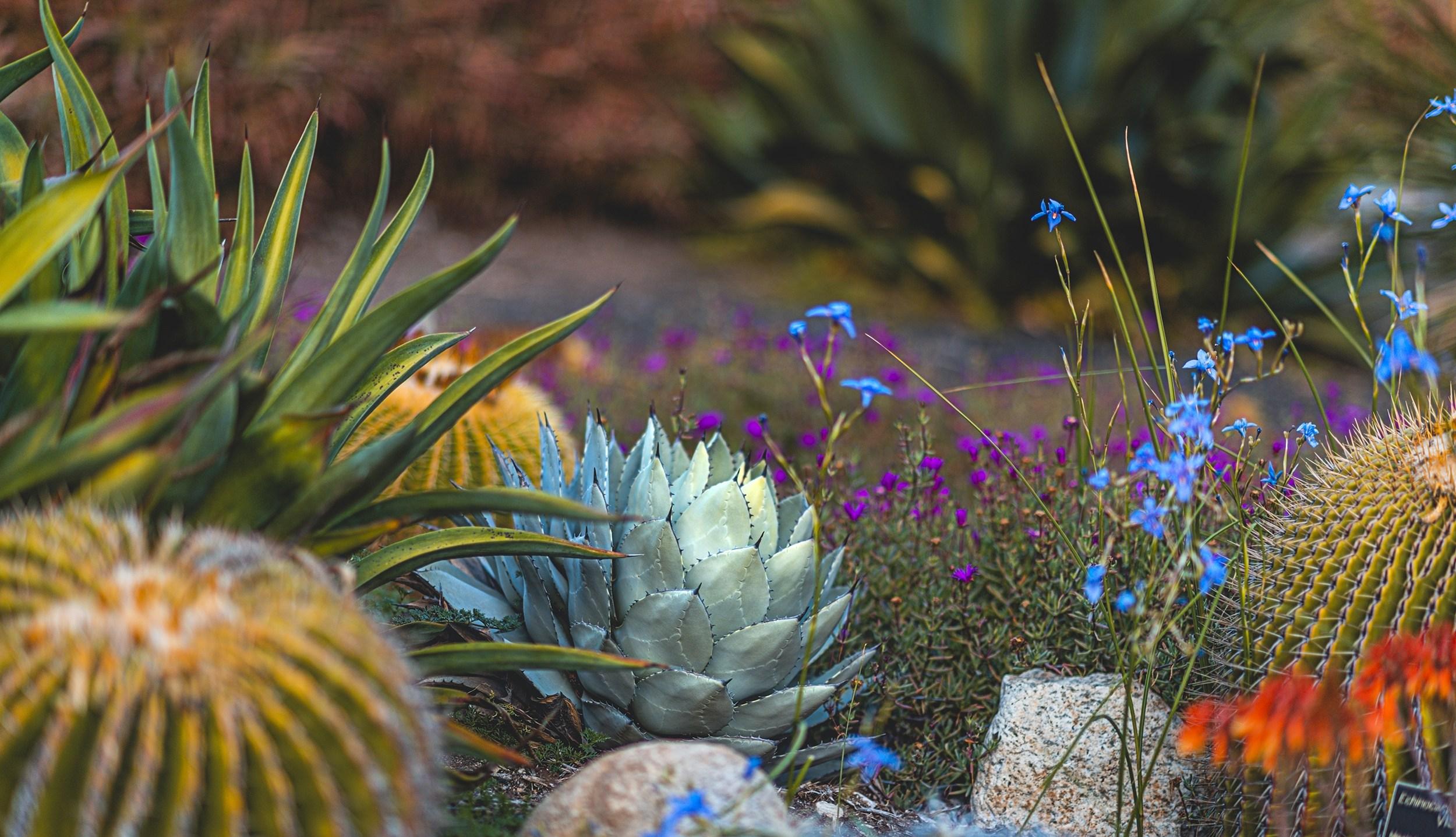 Desert Garden Desktop Wallpaper Happy New Year 2020 Nainaco 2500x1437