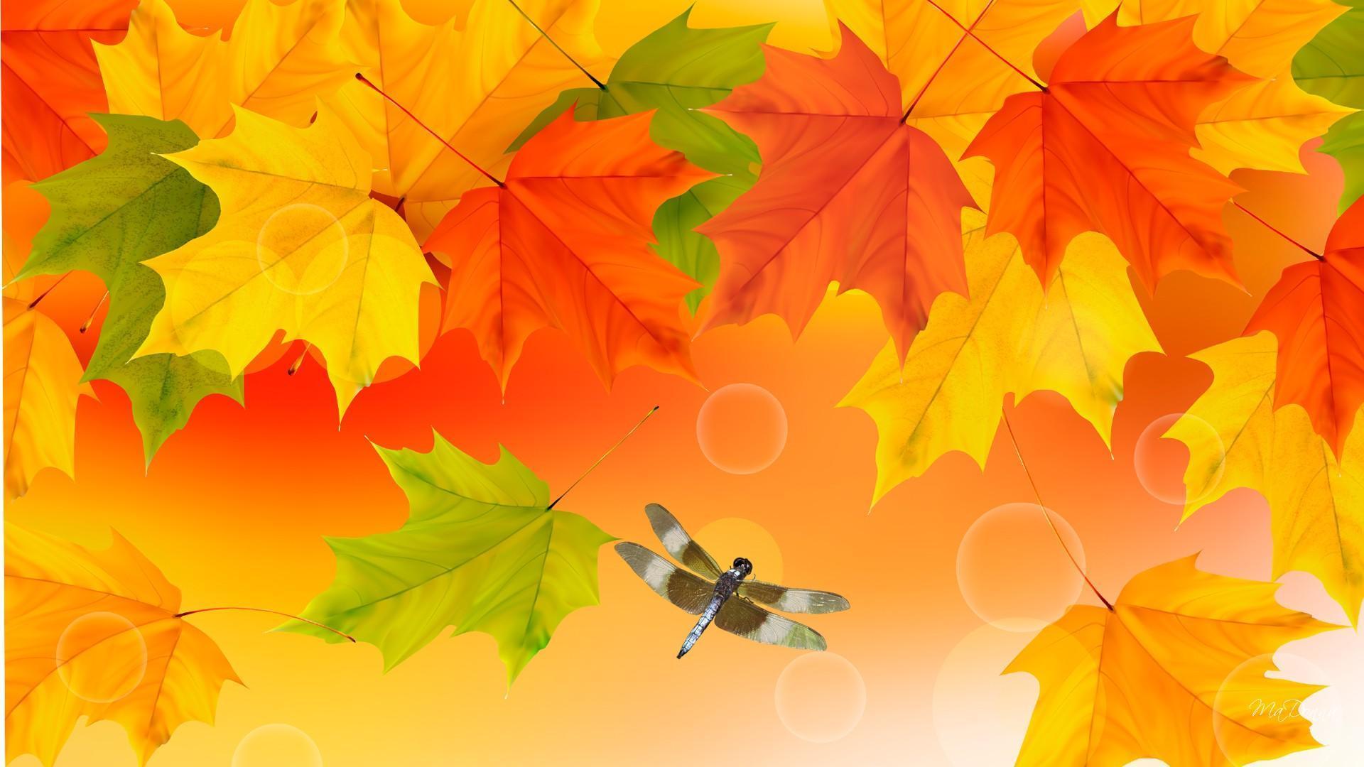 Brightness Of Fall Colors HD desktop wallpaper : Widescreen : High ...