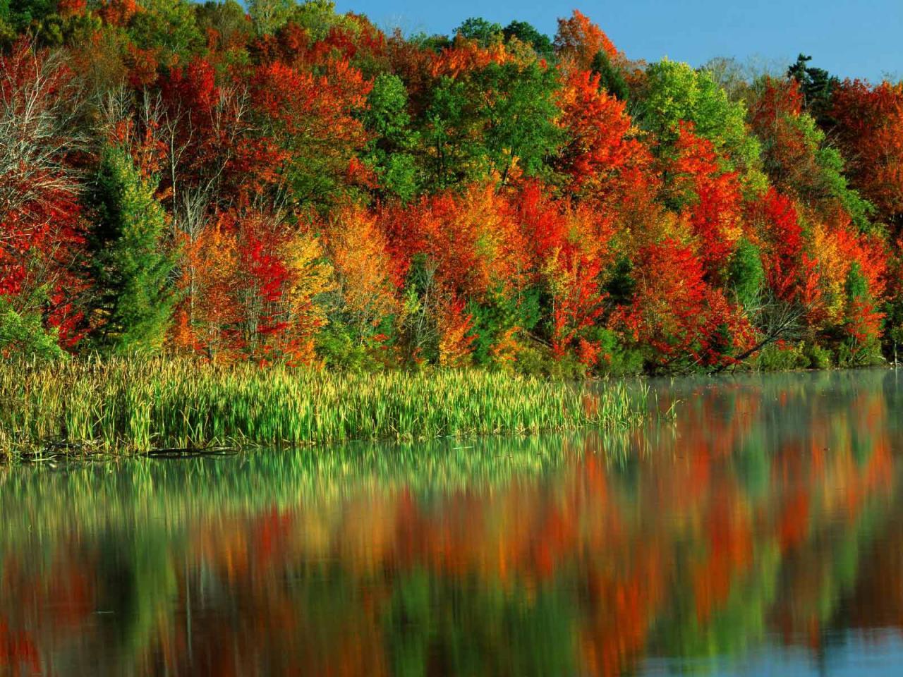 fall colors desktop wallpaper   wwwwallpapers in hdcom 1280x960