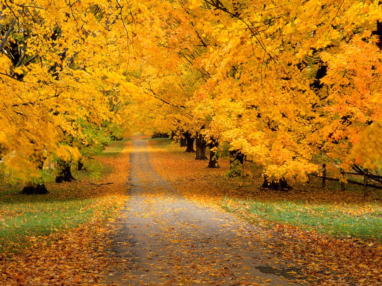 Beautiful Autumn Season Wallpapers HD Nice Wallpapers 1600x1200