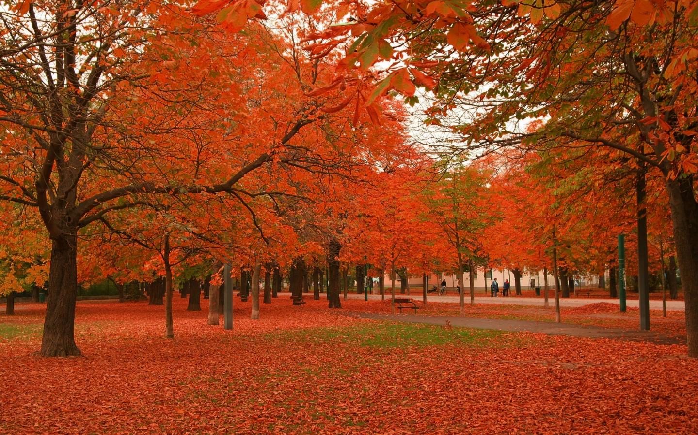 Beautiful Autumn Trees 1440 x 900 Download Close 1440x900