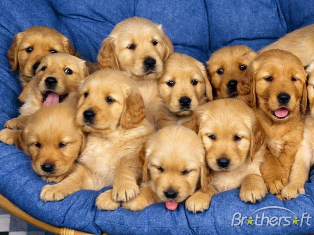 Download Cheerful Dogs Screensaver Cheerful Dogs Screensaver 10 640x480