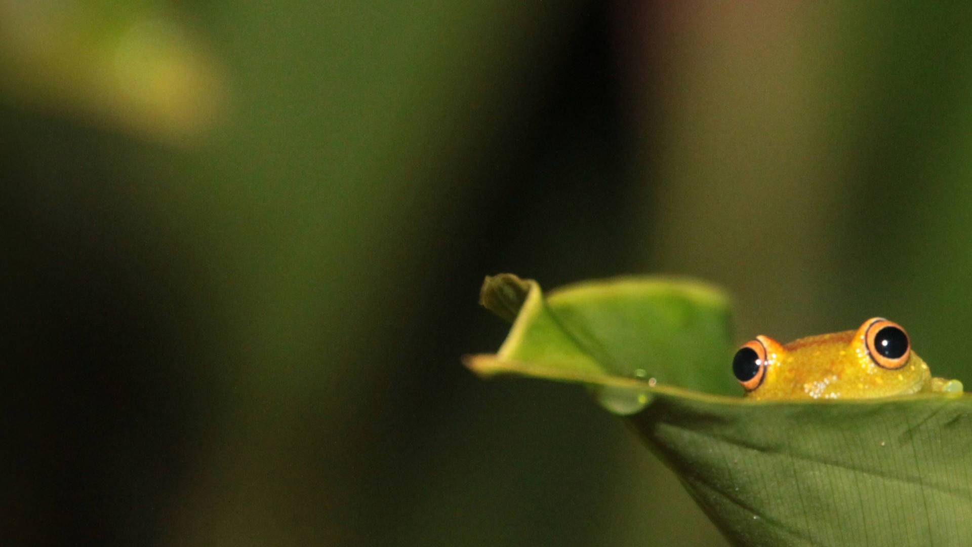 Frog HD Wallpapers High Quality Wallpapers 1920x1080
