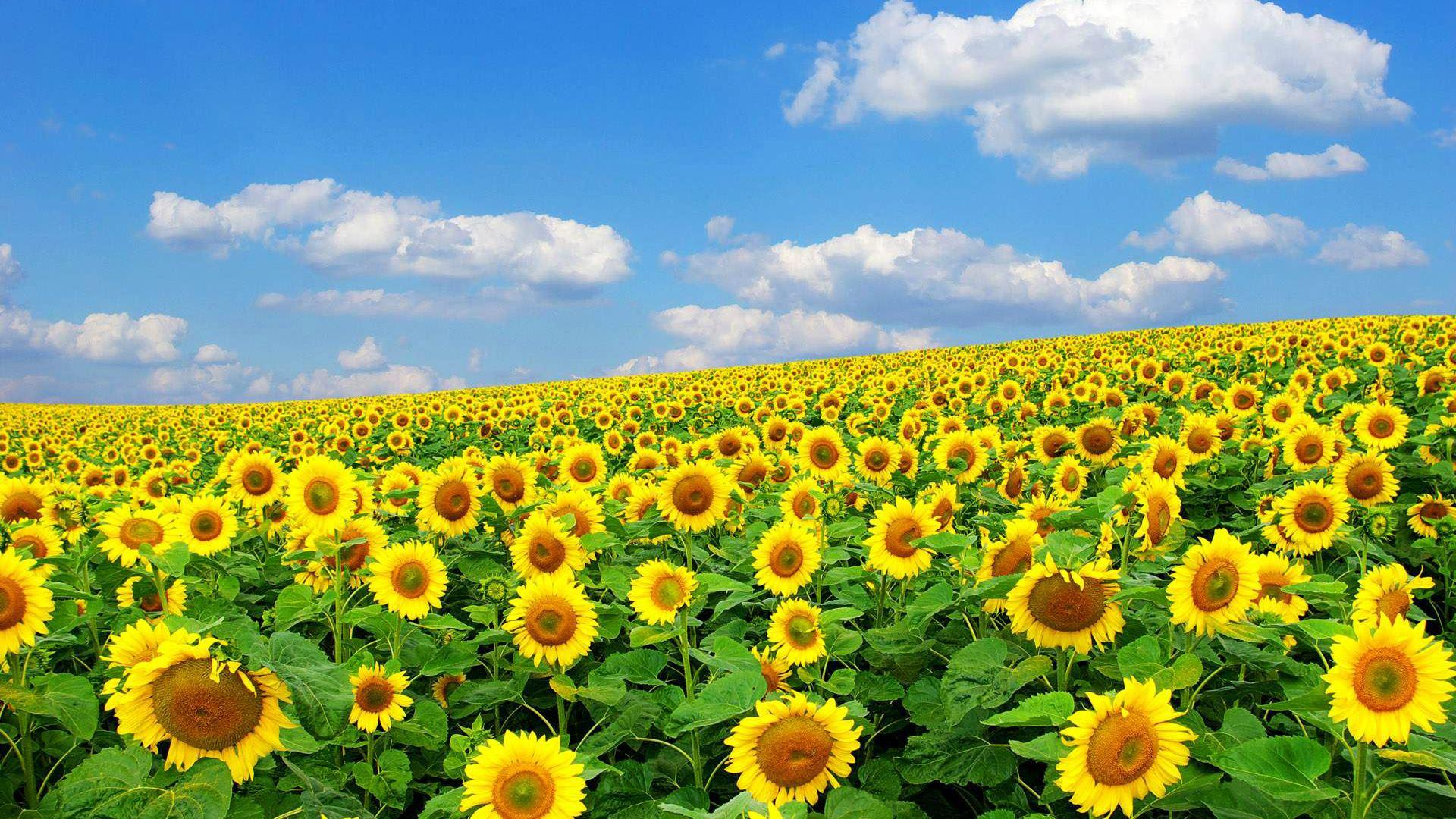plants hd wallpapersflowers spring season desktop wallpaper 1692276 1920x1080