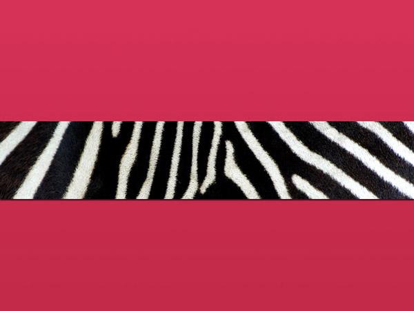 Design Studio New York NY Zebra Print Backgrounds Wallpapers 600x450