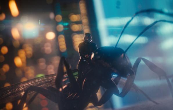 Wallpaper ant man antman ant man movie film 2015 year paul 596x380