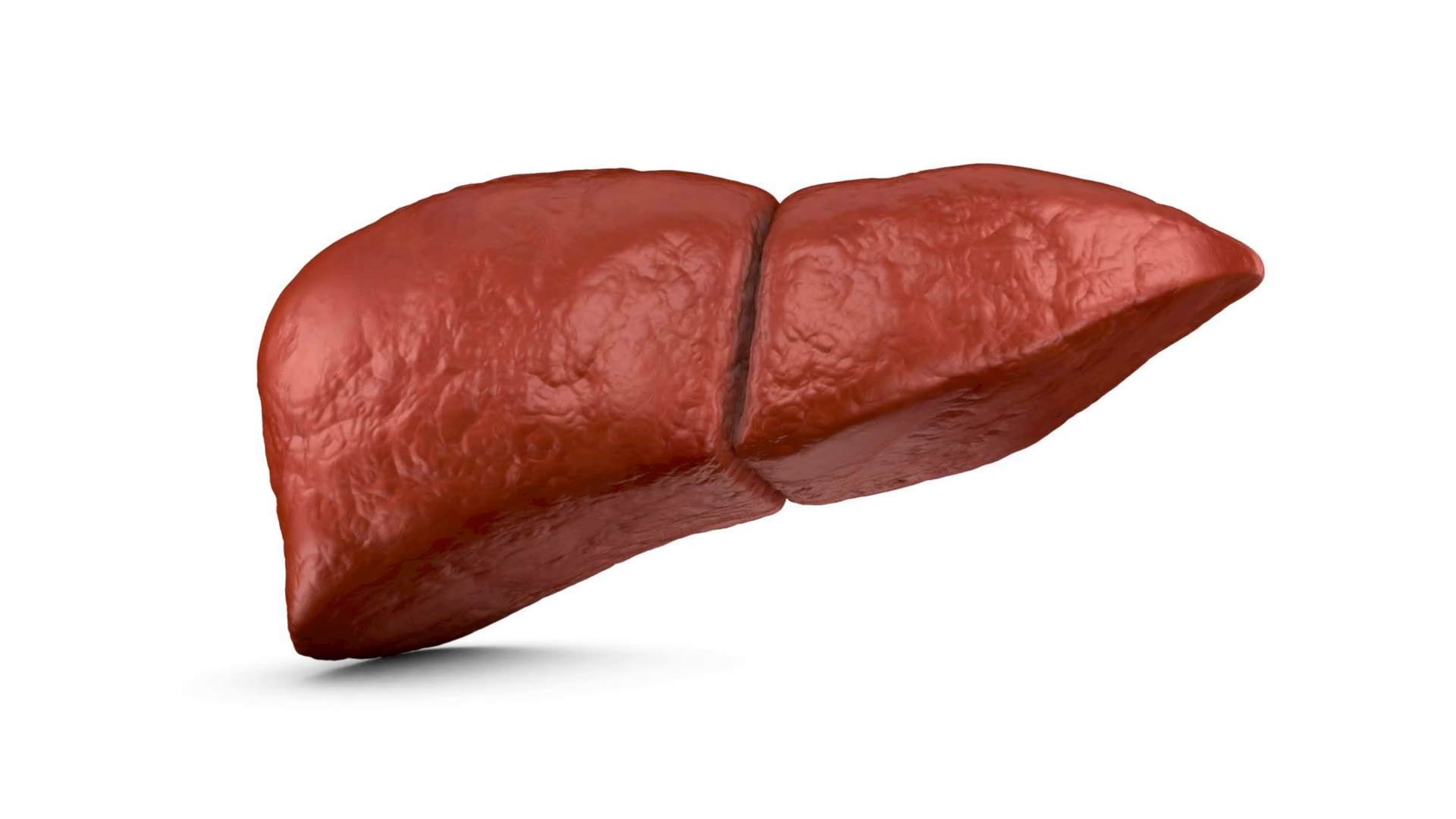 human liver on a white background 3d render Motion Background 1920x1080