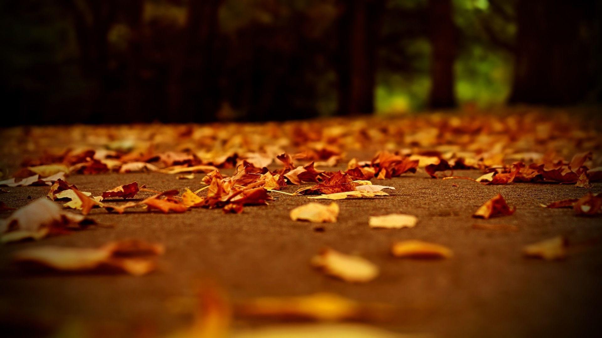 Fallen leaves wallpaper 14951 1920x1080