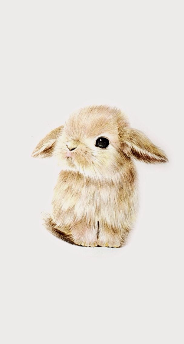 Wallpaper super cute kawaii pet love dwarf bunny rabbit 608x1136