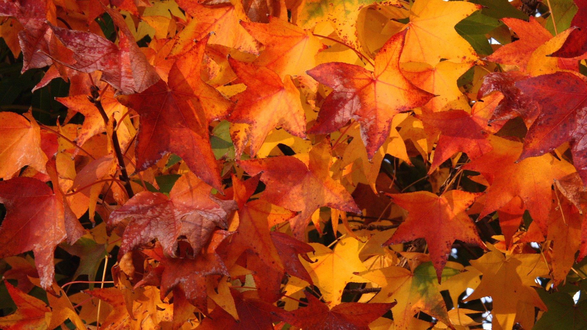 Theme Bin Blog Archive Fall Colors HD Wallpaper 1920x1080