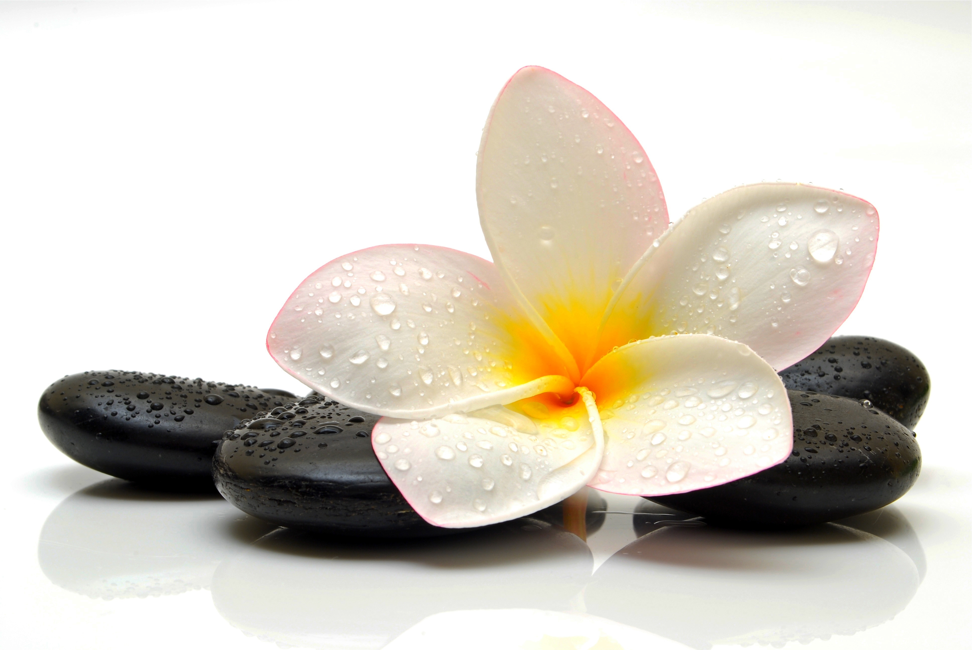 flower spa drops stone plumeria Wallpapers 3872x2592