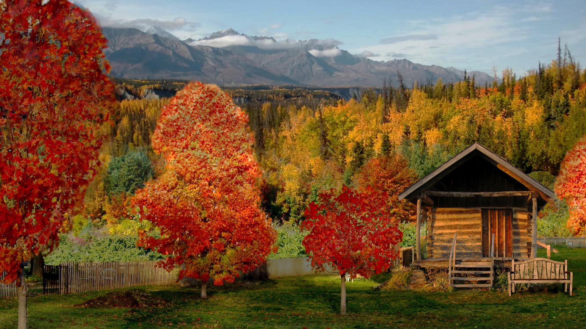 Log cabin in a beautiful autumn forest   99255   High Quality and 1920x1080