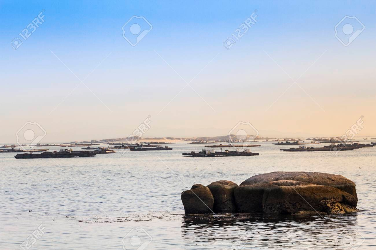 Mussel Aquaculture Rafts In Arousa Bay With Areoso Island At 1300x866