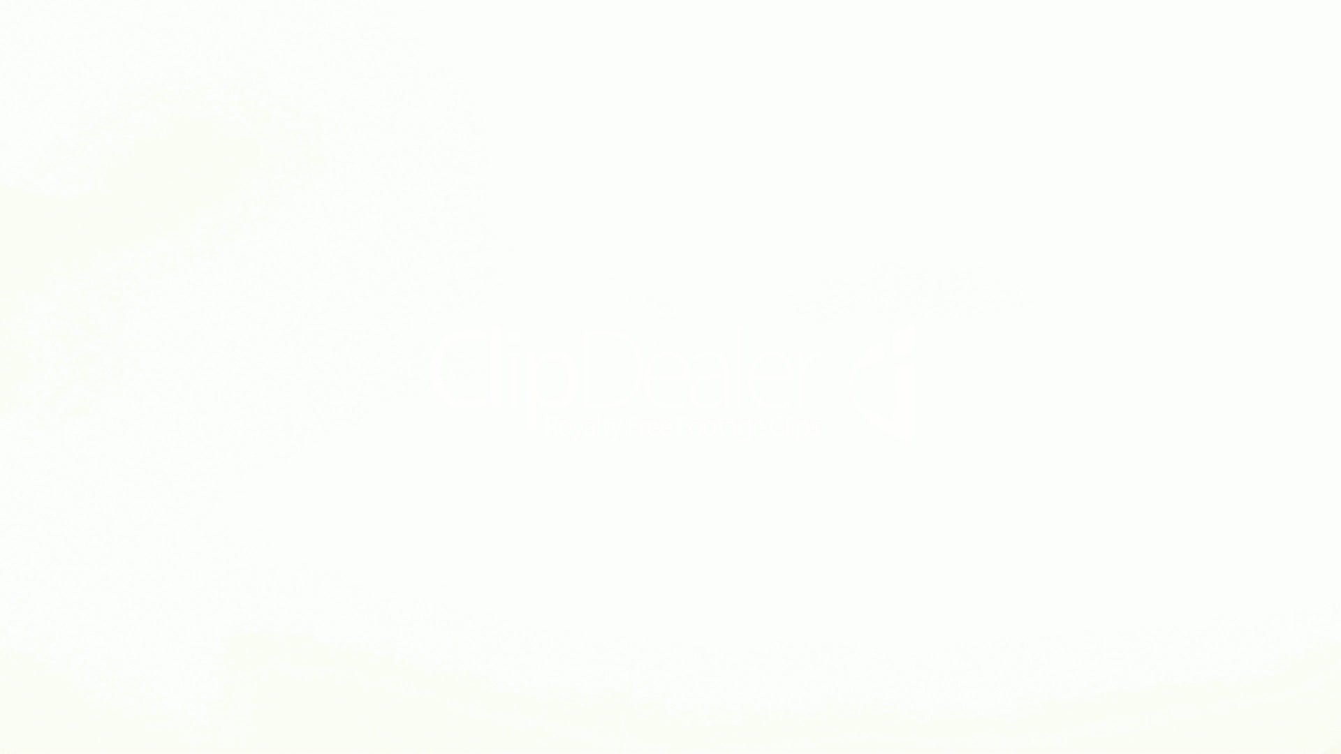 White Background Wallpaper - WallpaperSafari