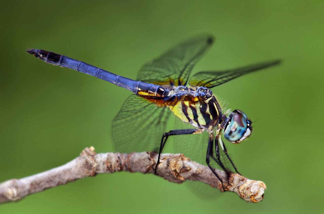 Dragonfly HD Wallpapers 1280x849