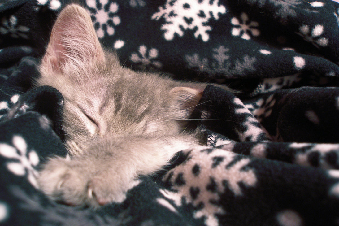 Cat And Dog Blankets