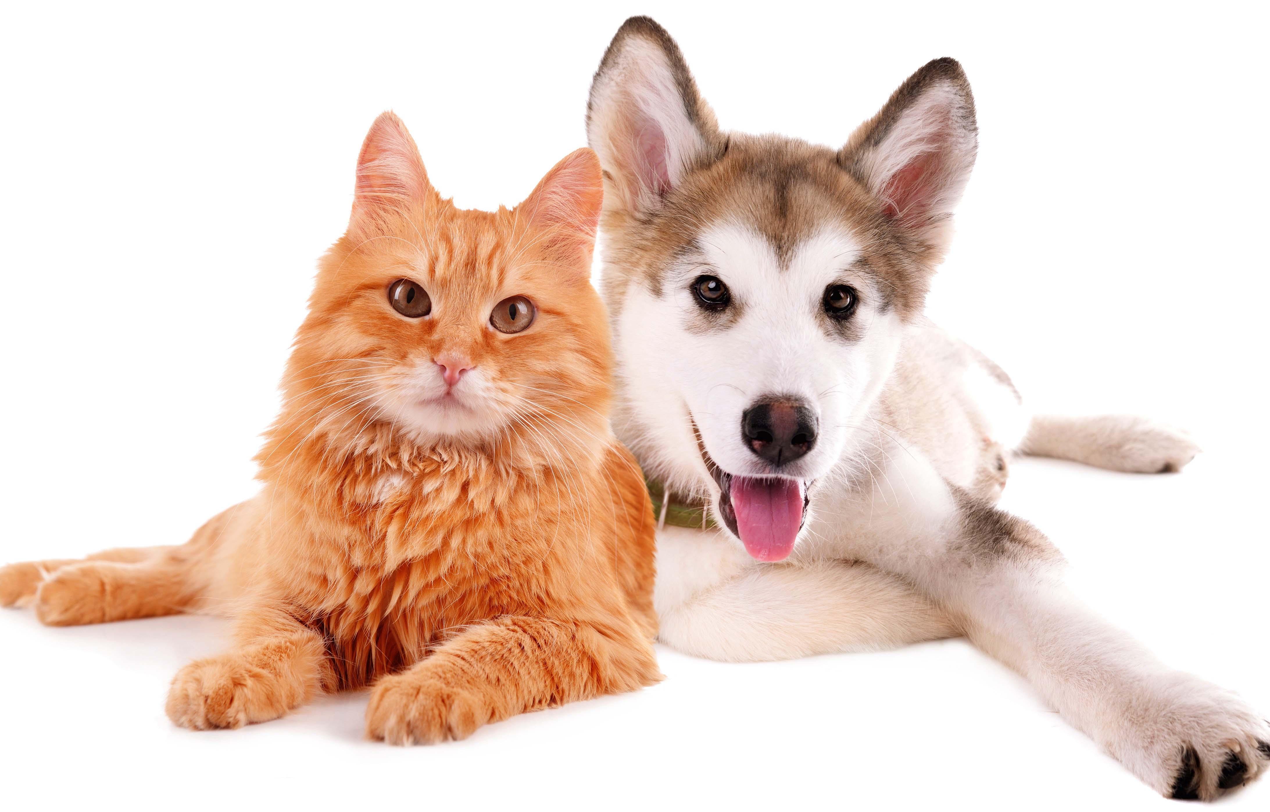 Selfish Cat Loyal Dog Funniest Wallpapers HD 4370x2793