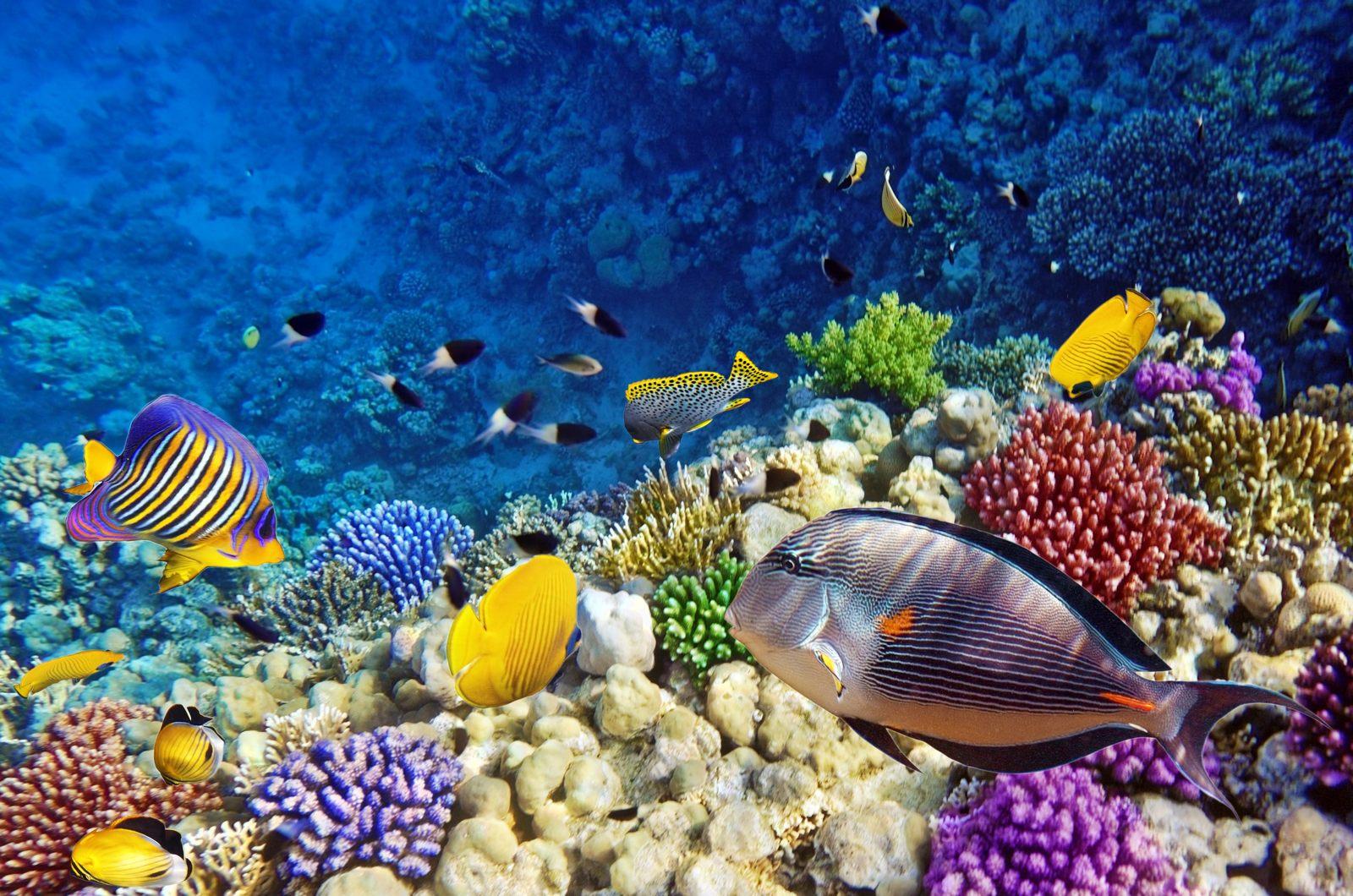 [48+] Coral Reef Wallpaper HD on WallpaperSafari