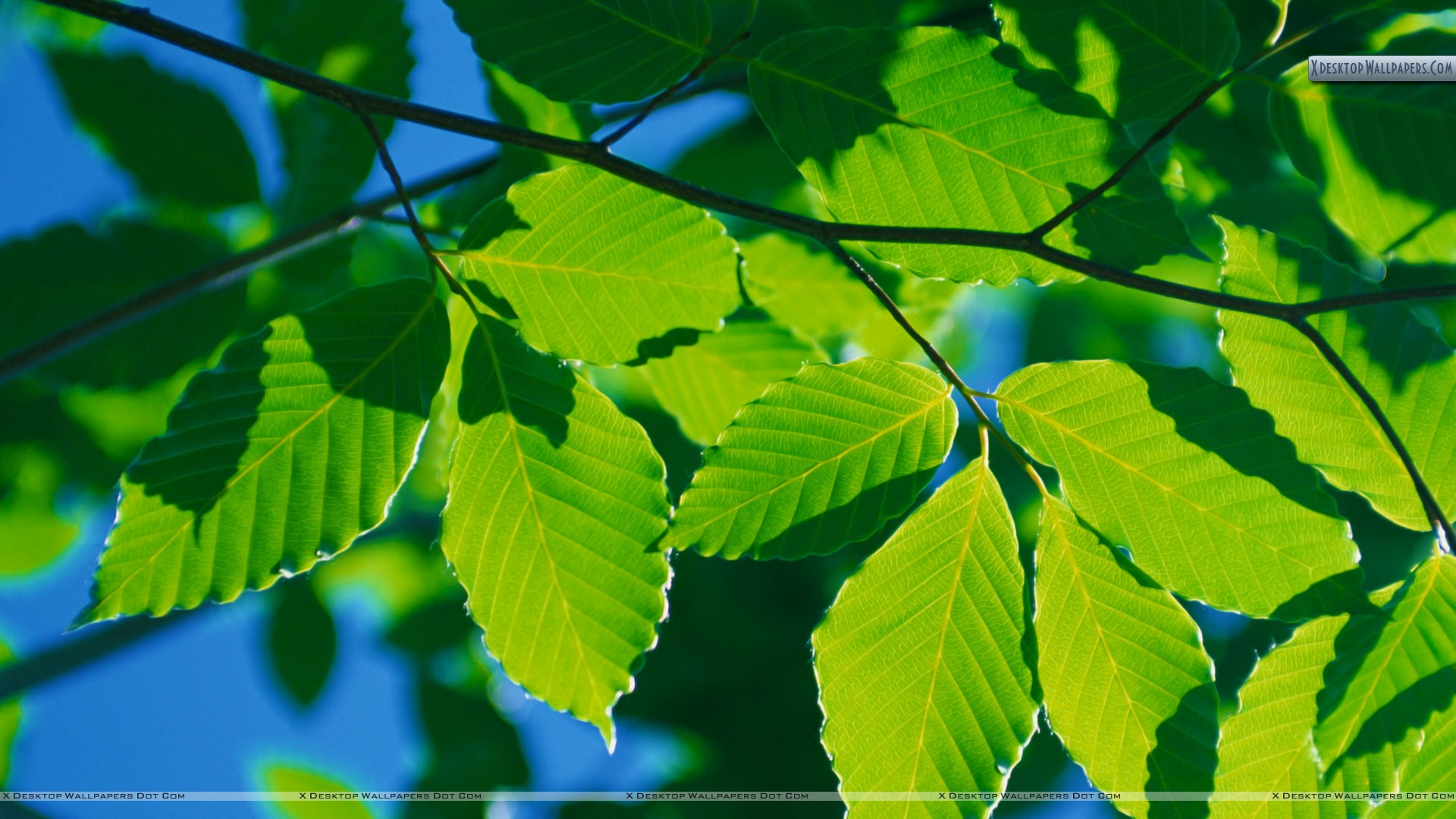 40   Tree Leaf Wallpaper On Wallpapersafari
