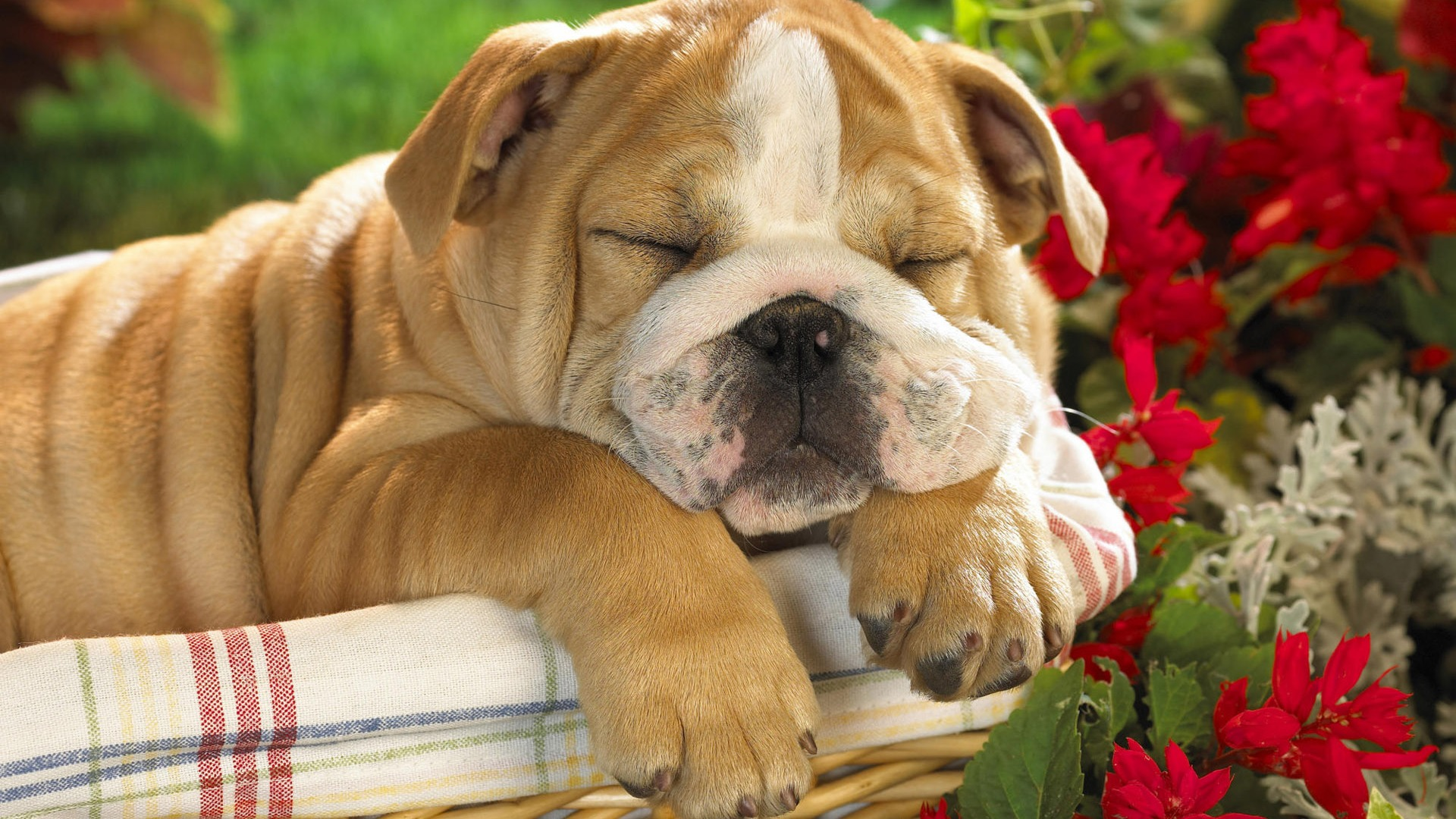 Cute Dogs Wallpaper HD Pictures Freetopwallpapercom 1920x1080