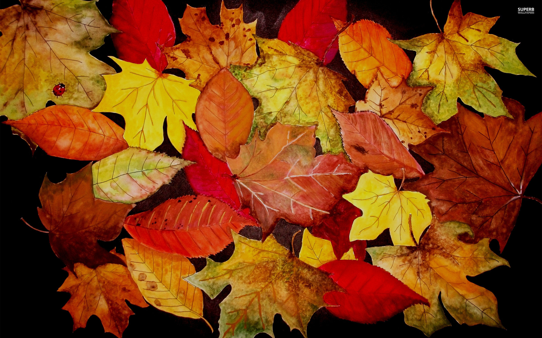 Fall Wallpaper Autumn Leaves   Desktop Background High Resolution 2880x1800