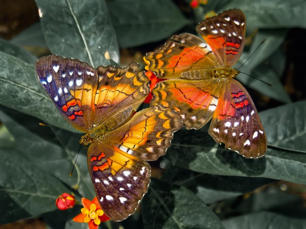 background computer desktop wallpaper butterfly Car Tuning 1024x768
