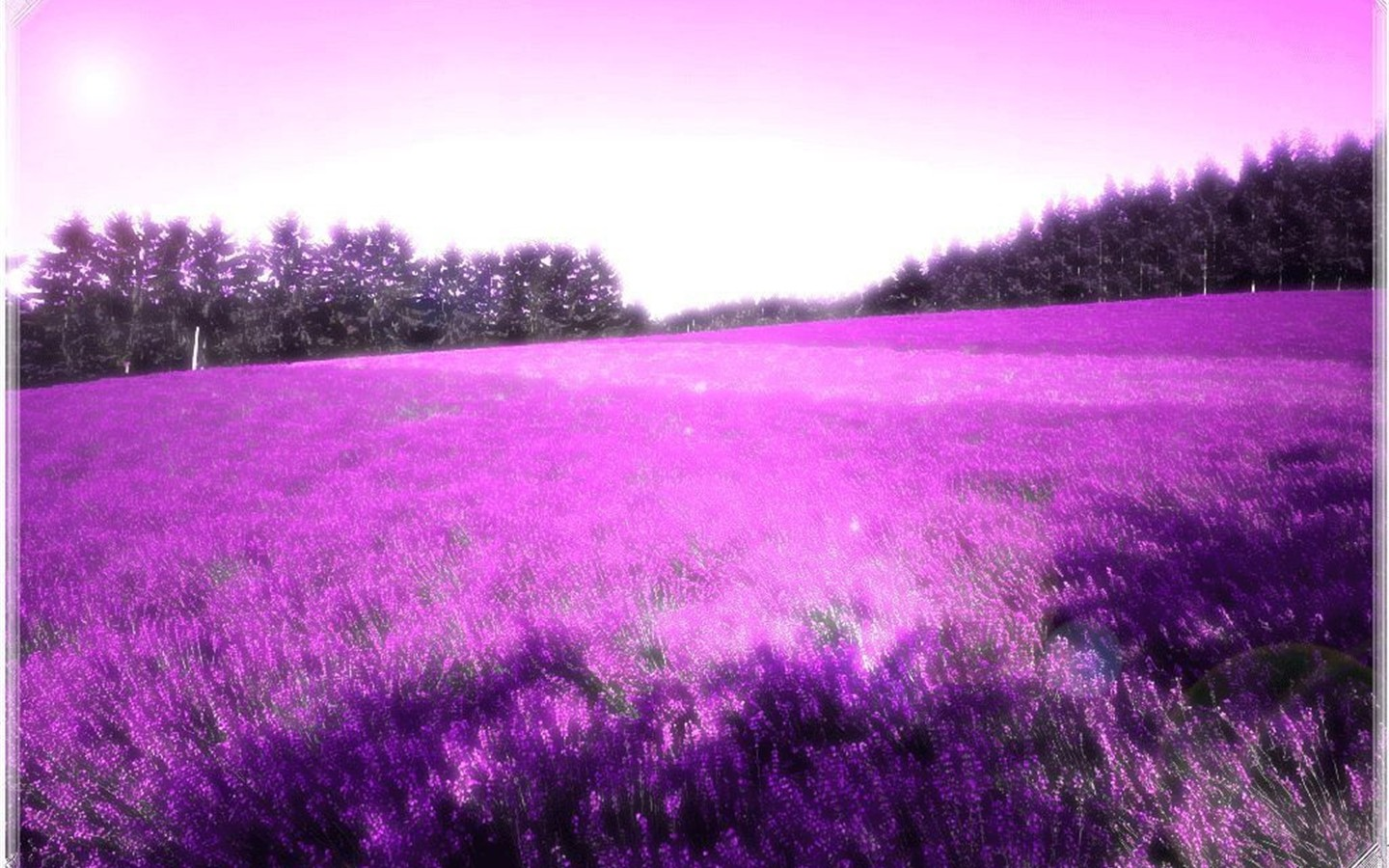 Field of Purple Flowers the Sky is Even Painted Purple Easy to Apply 1440x900