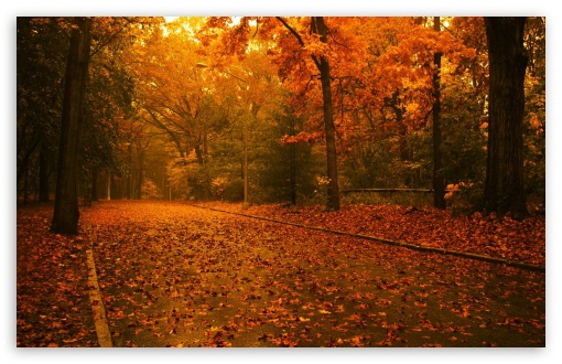 Fall Scene wallpaper 510x330