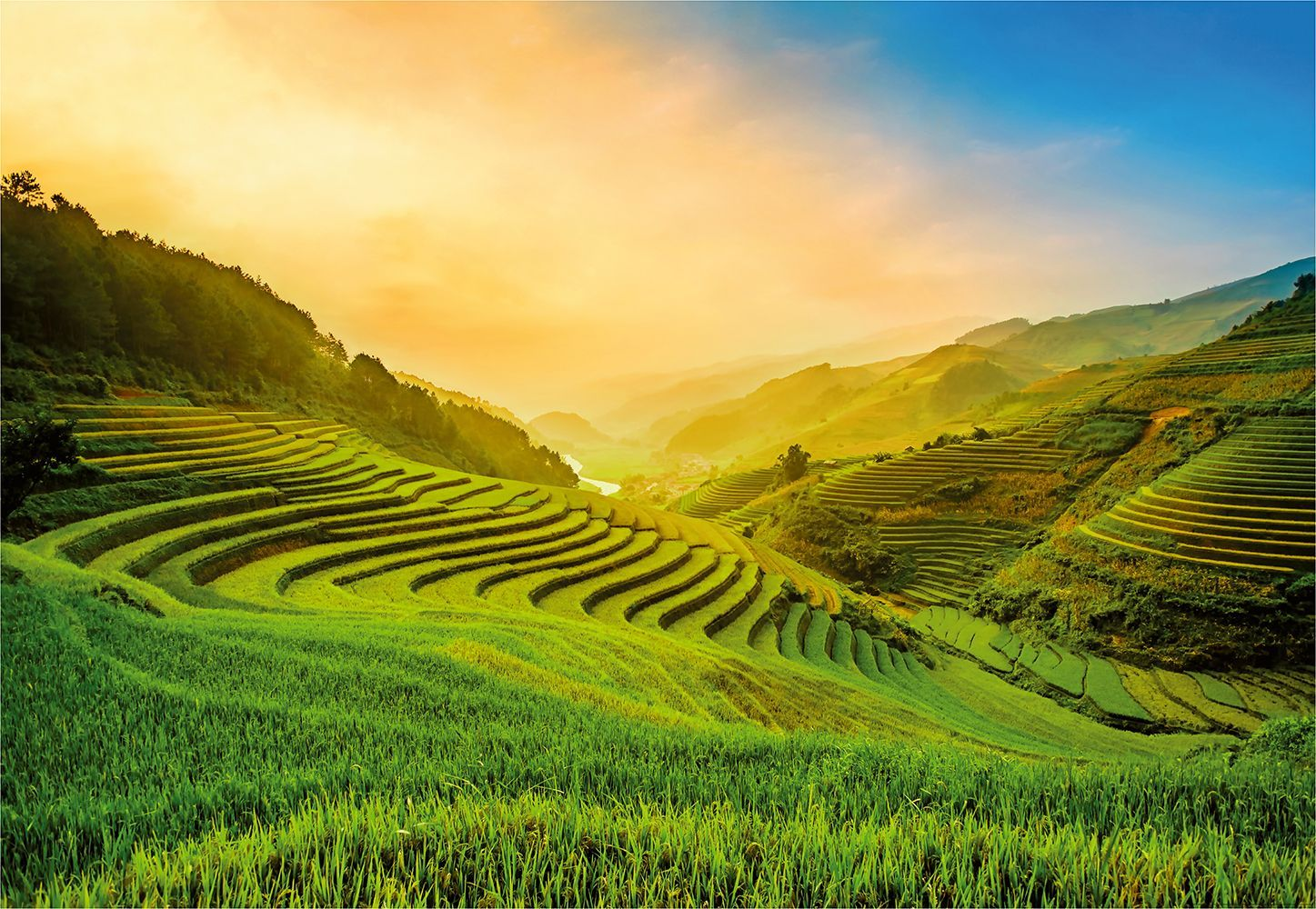 Rice Field Wallpapers   Top Rice Field Backgrounds 1447x1000