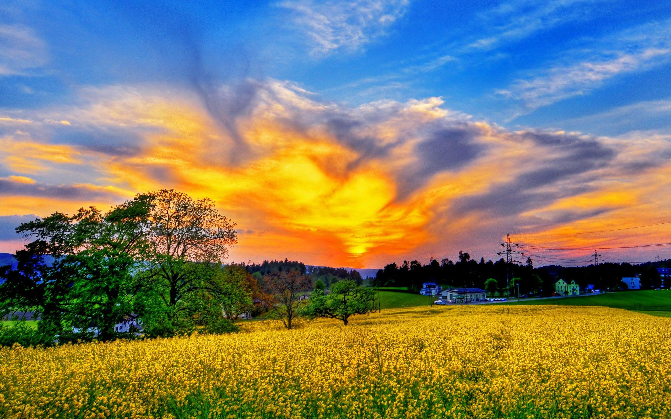 RENeW: Summer Scenes of Nature's Beauty  Beautiful Summer Scenes