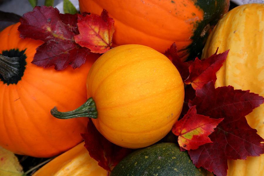 Thanksgiving Wallpapers Pumpkins Wallpapers for Thanksgiving Pumpkin 900x600