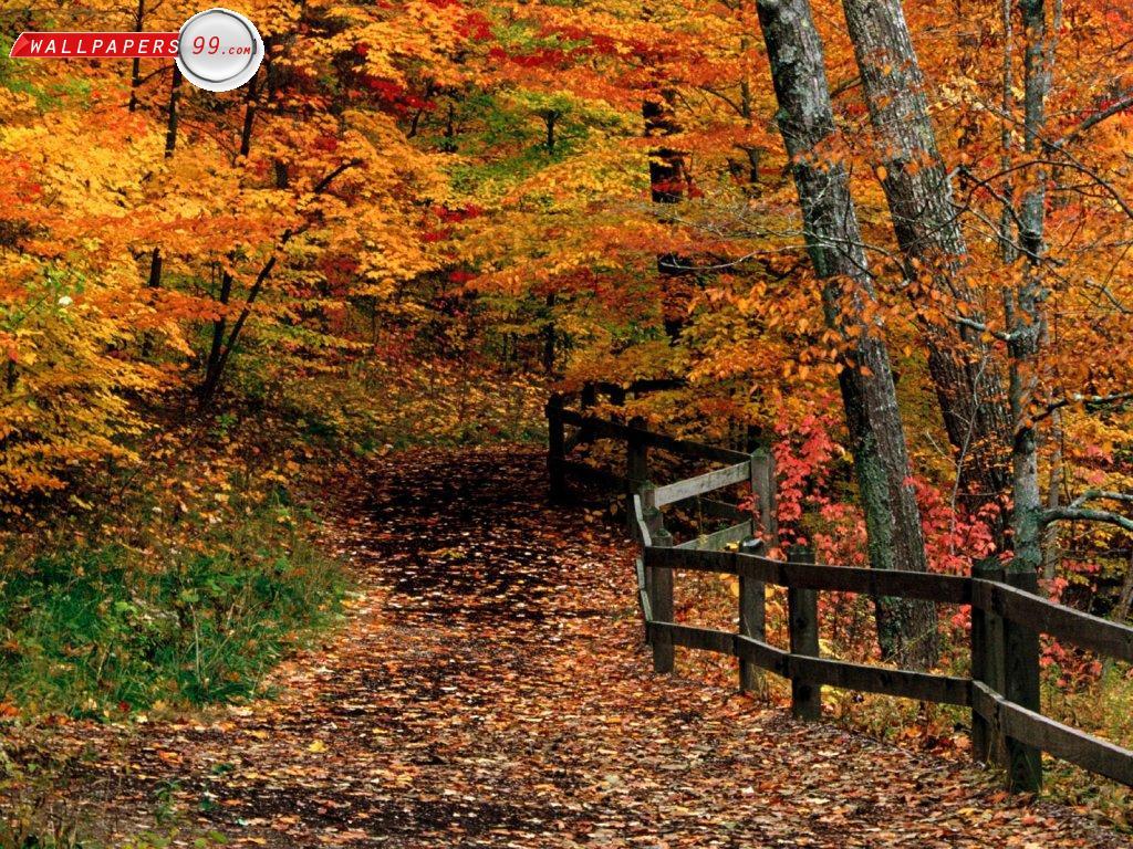 Fall autumn wallpaper hd 1024x768