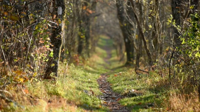 Appalachian Trail Conservancy 1440x806