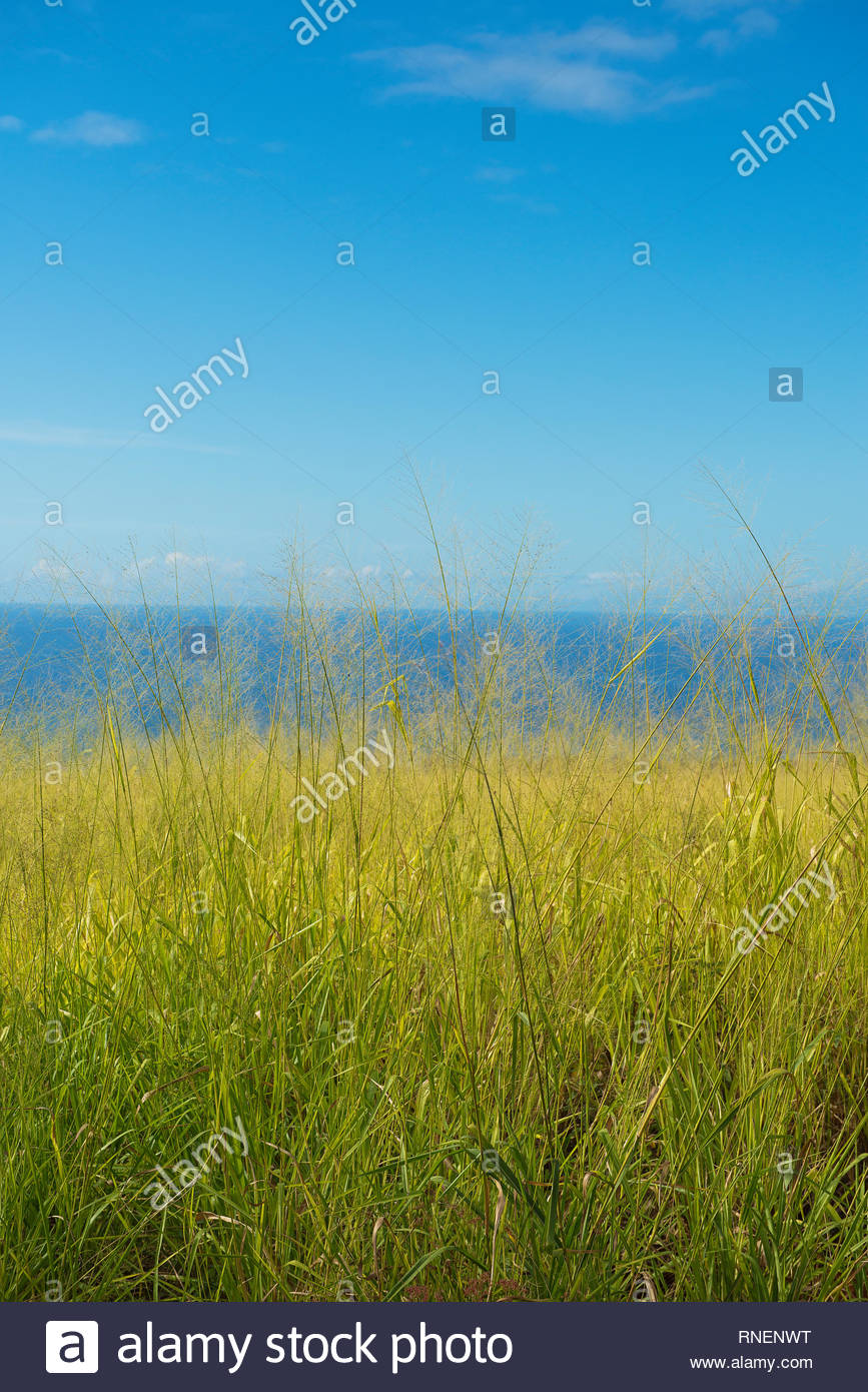 Grass with the ocean background Kauai Hawaii Stock Photo 867x1390