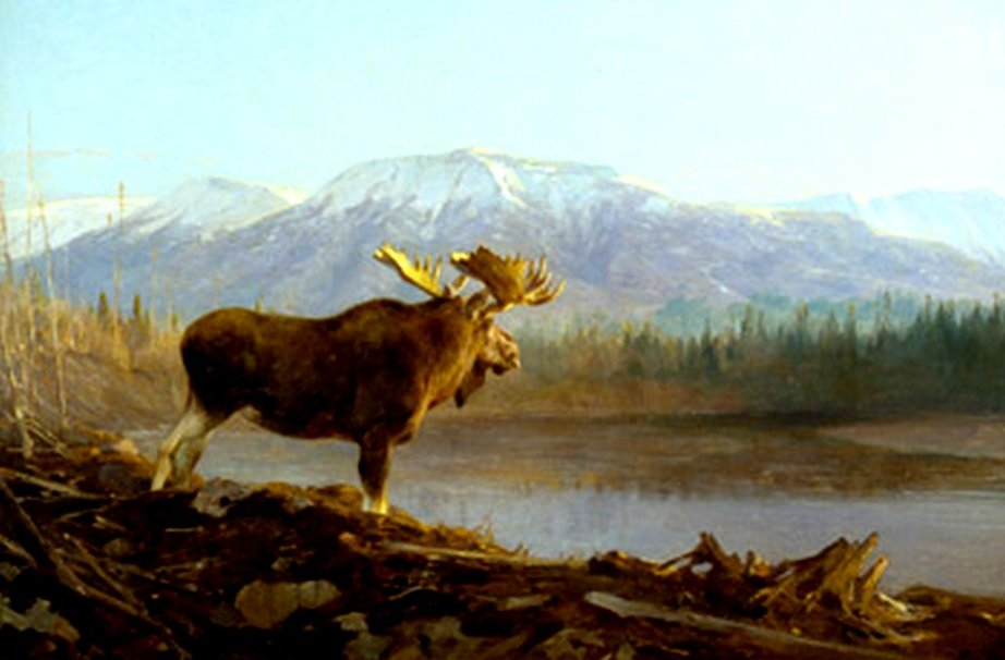 moose wallpaper   weddingdressincom 922x606